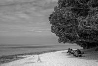 想い出はモノクローム - 沖縄 Part.32 - - 夢幻泡影