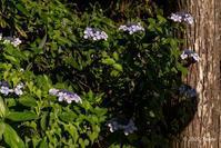 高野山奥の院 - toshi の ならはまほろば