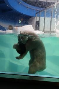2020年7月白浜パンダ見隊その2海獣館とペンギン館 - ハープの徒然草