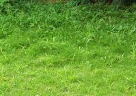 梅雨明けの庭掃除 - Baking Daily@TM5
