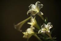 優しく香る - 瞳の記憶