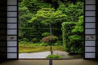 芬陀院・サツキ咲く頃 - 花景色-K.W.C. PhotoBlog