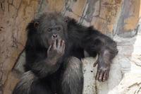 睡眠と集中力 - 動物園のど!