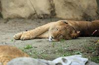 最高気温37度とか - 動物園のど!