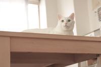 世界猫の日 - Omoブログ