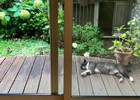 真夏の庭のお客さま - ひとやすみ。