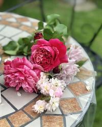 どちら様のバラ?と変わらぬバラ♡と、薬剤散布♫ - 薪割りマコのバラの庭