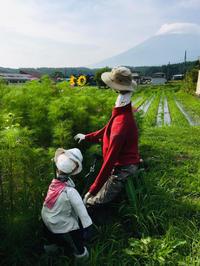 案山子‼️ - 富士のふもとの農業日誌