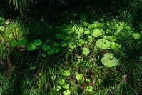 Green Green Green - 夢幻泡影