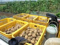 ジャガイモ掘り - 野菜tukuri