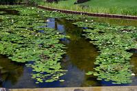 草津市立水生植物公園みずの森其の二 - デジタルな鍛冶屋の写真歩記