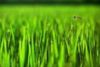 みちのく田園景 - みちのくの大自然