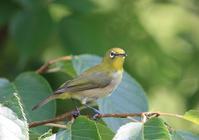 今日の鳥さん200802 - 万願寺通信