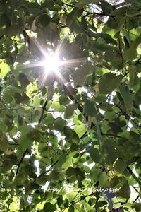 忙しくなってきた夏休み - 日本、フィレンツェ生活日記