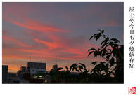 屋上や今日も夕焼依存症 - 風と光の散歩道、有希編2a