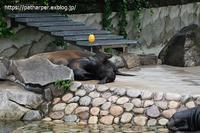 2020年7月王子動物園2その2みゆきさんのオヤツタイム - ハープの徒然草