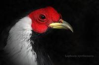 ハッカン - 動物園の住人たち写真展(はなけもの写眞館)