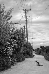 想い出はモノクローム - 沖縄 Part.36 - - 夢幻泡影