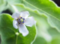 蔦の白い花 - 静かに過ごす部屋