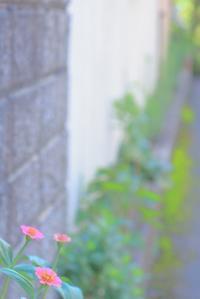 花は奇数が良い - 心はいつもそばにいてね
