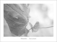 目の前の被写体 - Minnenfoto