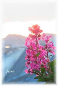 夕日と百日紅 - おだやかに たのしく Que Sera Sera