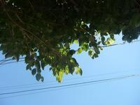 酷暑の日々 - hibariの巣