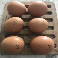 エコに時短ゆで方〜程よい半熟卵を求めて - ののち幾星霜