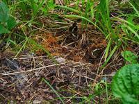 集団吸水 - 飛騨山脈の自然