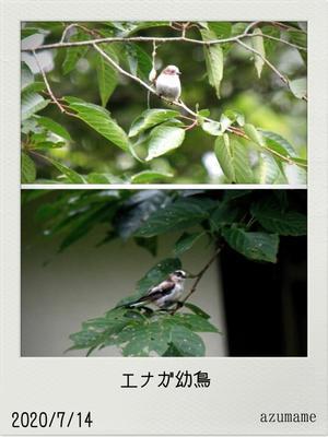 7月の野鳥 -