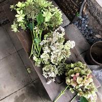 紫陽花の終わり - ドライフラワーギャラリー⁂ふくことカフェ