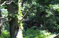 オオタカ3羽の雛 - Ootaka23S's Blog