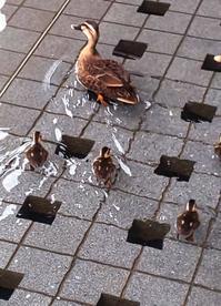8月14日   「水泳の日」 - 煎茶道方円流~東京東支部~