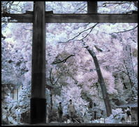 鳥居が有る風景 - コバチャンのBLOG