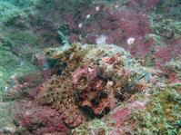 2014.09 福浦 The 1st Dive - ランゲルハンス島の海