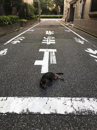 ネコのおまわりさん⁈ - Mamamayumi26's Blog
