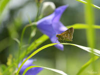 極暑の中にも秋の気配が - 蝶鳥写楽