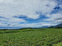 芋畑、ソフトクリーム、桜島 - おでかけメモランダム☆鹿児島