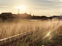 朝夕の灌水 - 週末農夫コーディーのイケてる鍬の振るい方