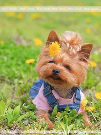 DOG PHOTO#151:2度目のお盆。 - Precious*恋するカメラ