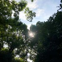 早朝ジョギング6時半スタート2020.8.14 - ちゃーぼー日記