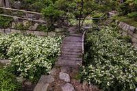 大庄屋諏訪家屋敷の半夏生 - 花景色-K.W.C. PhotoBlog