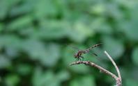 フィールドtyの記録 2020/8/14 - 昆虫(動植物)撮影記録