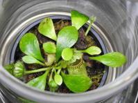 食虫植物展 - *la nature*