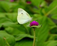 鼻高展望花の丘で花と虫 - 星の小父さまフォトつづり