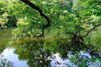 五色沼 - くろちゃんの写真