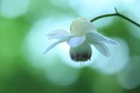 森の妖精 - 光りの音   photo gallery