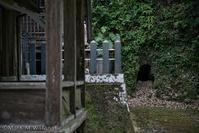日吉神社を散策 - Mark.M.Watanabeの熊本撮影紀行