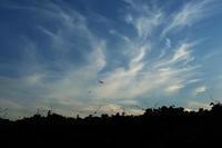 夏の早朝 - 空を見上げて