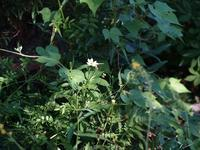 夏の異変 - hibariの巣